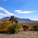 Paiute Desert